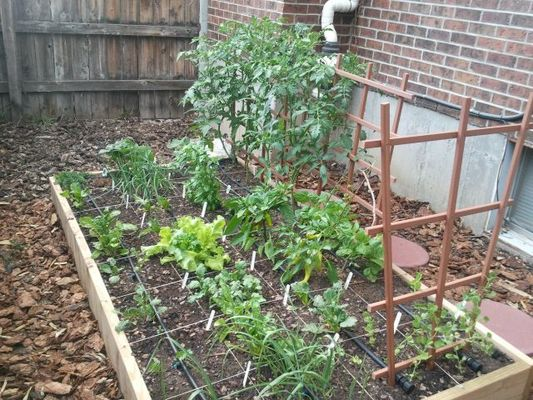 carousel 9soaoex rfy4v7dlgcq1efjqsk29nu60vw8ahqx0hjw - How To Start A Vegetable Garden From Scratch