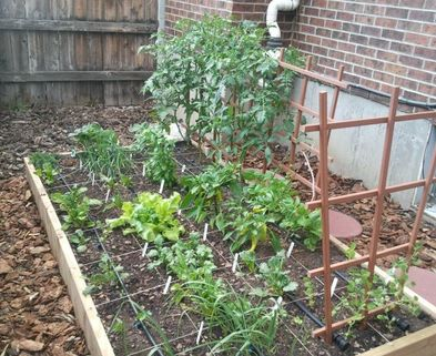 Gardening Classes Denver Beginner Vegetable Gardening How to