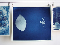 Small_photo_cyanotypes
