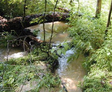 Medium stream5