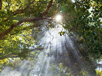 Small_light_shining_through_trees_god_like