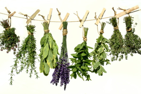 Herbal Medicine Classes Chicago - Awesome Herbs! | Dabble