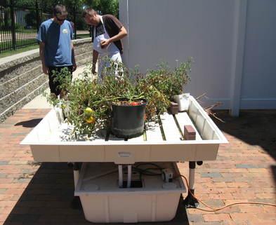 Hydroponics Indoor Gardening Classes St Louis Diy Deep