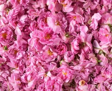Medium roses