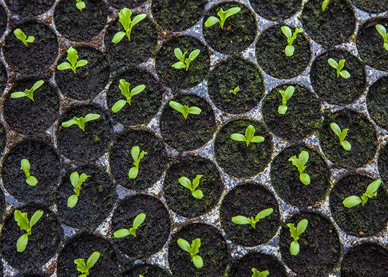 Carousel seedlings