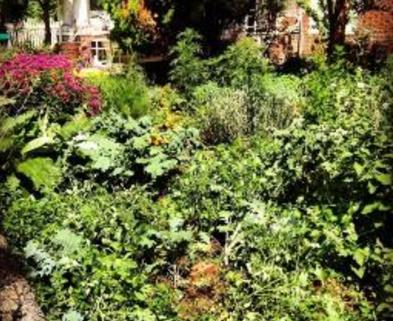 Medium growng plants that heal 256px 256px