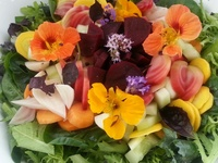 Small_summer_salad