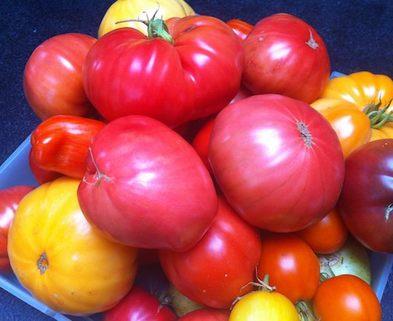 Medium lm tomato photo