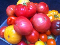 Small_lm_tomato_photo