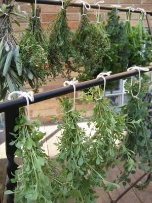 Carousel herbs drying