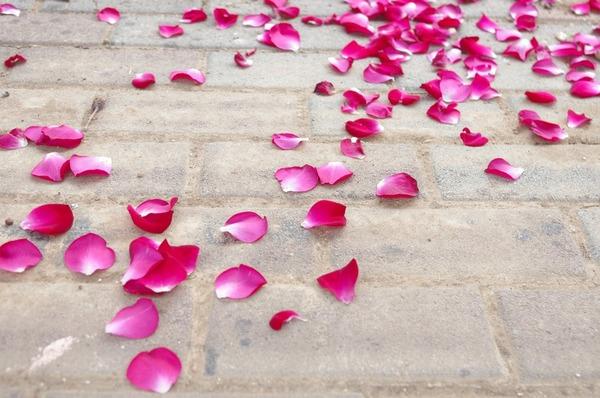 Carousel rose 968003 960 720