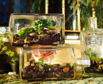 Medium few terrariums