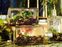 Small_few_terrariums