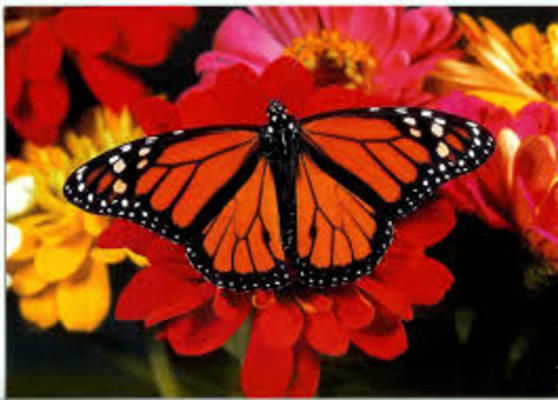 Carousel butterfly