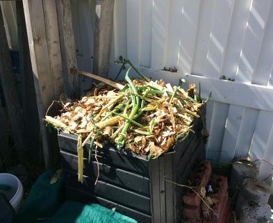 Medium compost bin 101417