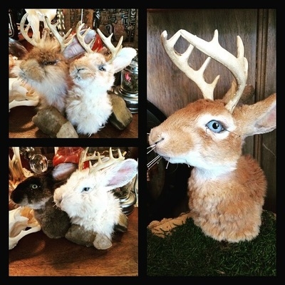 taxidermy classes chicago jackalope taxidermy class dabble