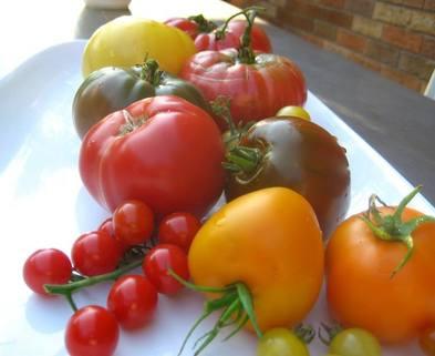 Medium lm tomatoes 2
