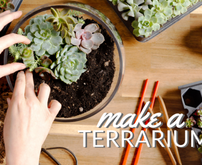 Medium make a terrarium urban sprouts dabble seattle