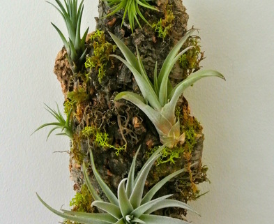 Medium air plant vertical garden