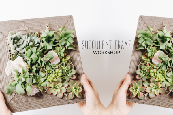 Carousel succulent living frame dabble seattle urban sprouts classes