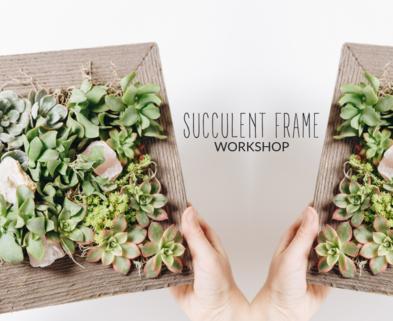 Medium succulent living frame dabble seattle urban sprouts classes