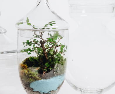 Medium bonsai terrarium urban sprouts dabble seattle classes