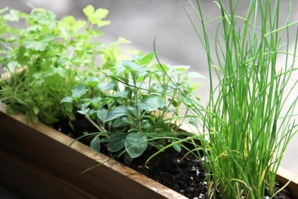 Carousel mini herb desktop garden class dabble seattle urban sprouts