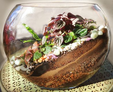 Medium moon terrarium