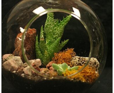 Medium bs succulent terrariums