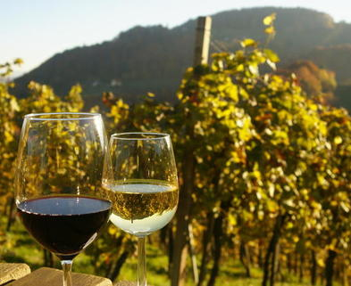 Medium private tour austrian wine tasting in a traditional augustinerkeller in vienna 122646