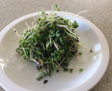 Medium salad mix microgreens