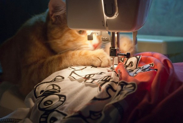 Carousel cat sewing machine