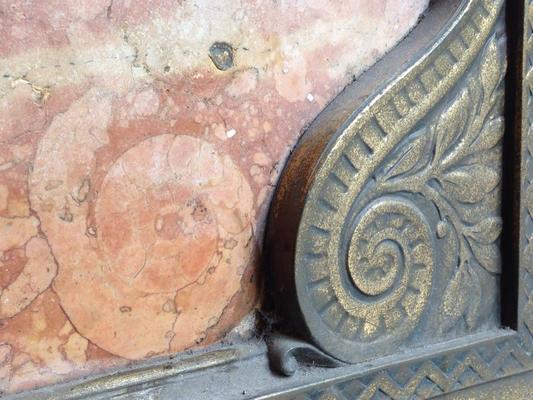 Carousel ammonite and bronze