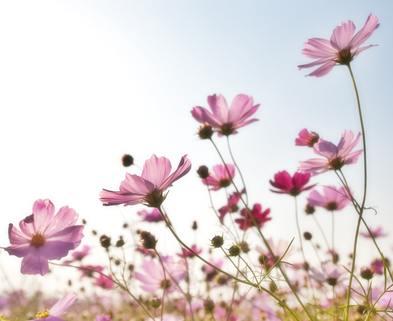 Medium flowers plants korea nature 158756