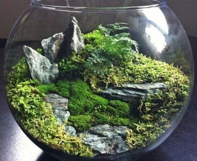 Medium moss gardens