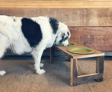 Medium 1 elevated pet bowl stand