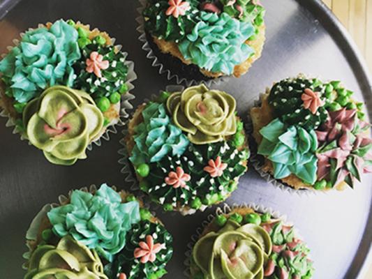 Carousel cupcake succulents