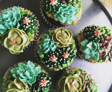 Medium cupcake succulents