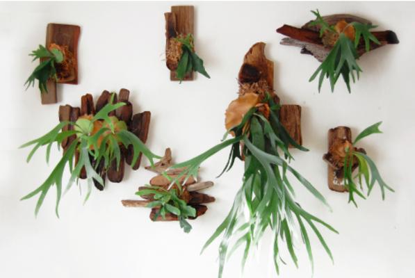 Carousel diy mounted fern urban sprouts dabble