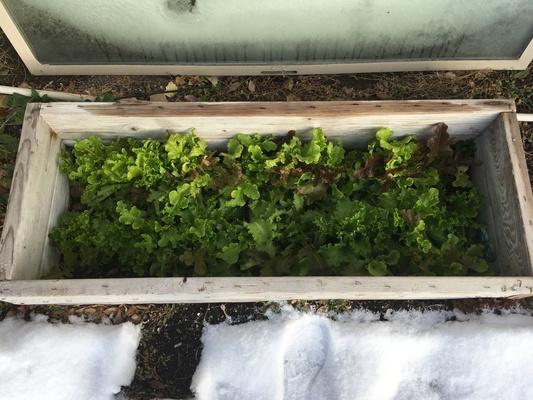 Carousel sunbox winter garden 12 3 18