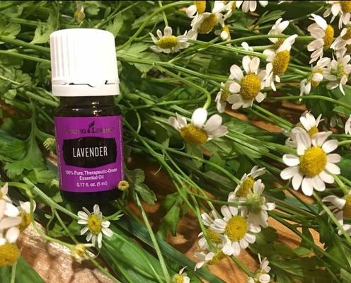 Carousel lavender