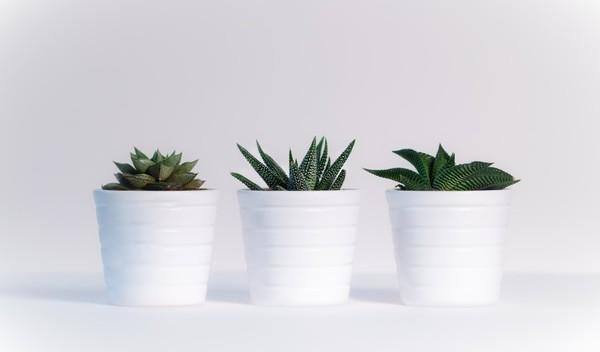 Carousel white pots plants cactus