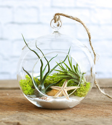 Carousel dabble mini terrarium
