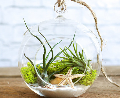 Medium dabble mini terrarium