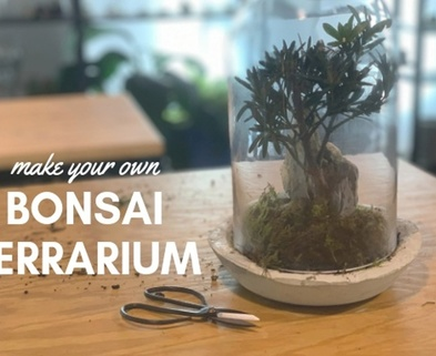 Medium bonsai terrarium workshop seattle urban sprouts dabble