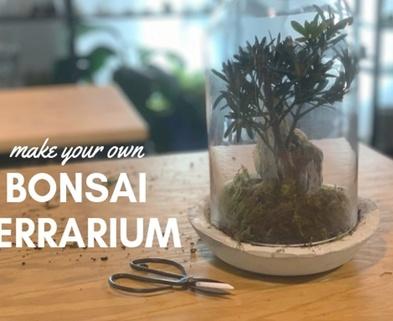 Medium bonsai terrarium workshop seattle urban sprouts dabble