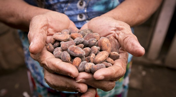 Carousel toasted cacao beans