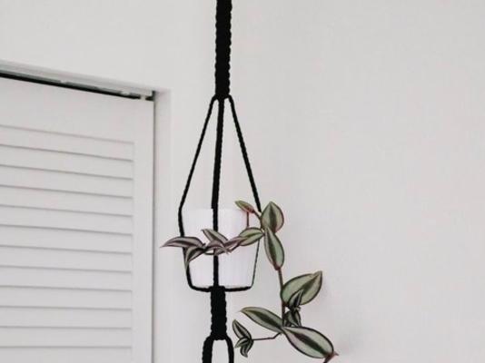 Carousel bold macrame plant hanger the works seattle dabble