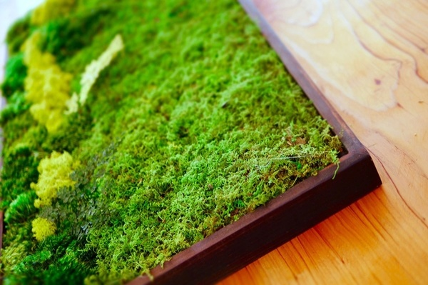 Carousel mini moss walls gardening classes dabble seattle urban sprouts