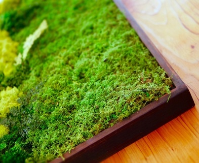 Medium mini moss walls gardening classes dabble seattle urban sprouts